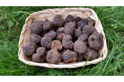 A basket of autumn black truffles